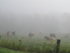 A foggy mornin' in newark Valley