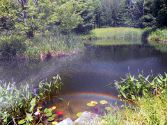 Rainbow Over Pond