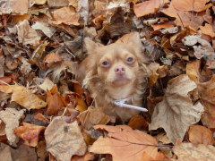 puppy loves the fall