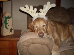 Kodi the sleepy reindeer!!