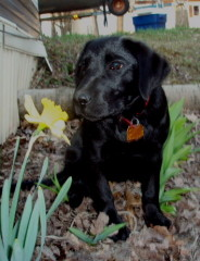 New puppy and spring flowers