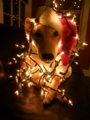 Decorate the Dog