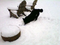 Koda having some fun in the snow!