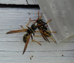 Sparring of the WASPS!!!