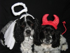 Angel and Devil Pups