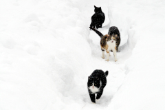 cats in snow path