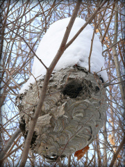 Snowy Winter Bee Hive