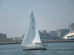 Boston Habor sailing