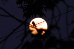 Bird Shadow by the Moon