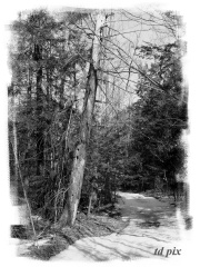Abandoned Road in Chenango County.