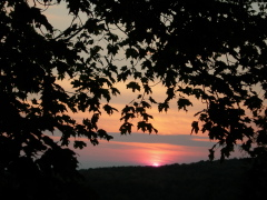 Sunset thru the trees