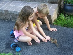 Chipmunk eating out of our hands.