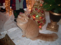 Is Fluffers Part Of The Christmas Decor?