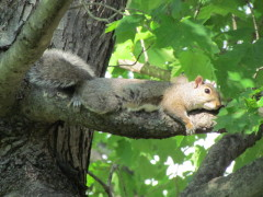 Squirrel Chillin' On A Hot Afternoon