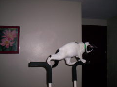 Cissy likes to exercise