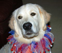 Tierney the puppy celebrates July 4th!!