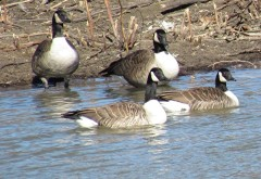 Cold, But Inviting - If You're a Goose!