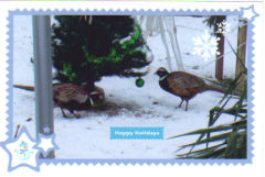 pheasants wishing all Happy Holidays