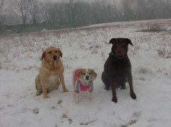 All of my dogs in the snow