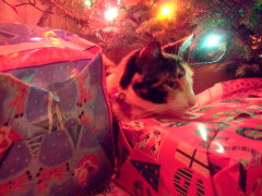 Lucky Guarding the Presents