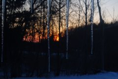 sunset behind icicles
