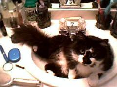 Spaz In The Bathroom Sink