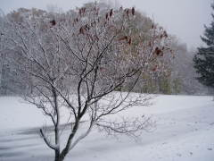 Winter on Oct. 28, 2008