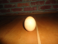 Fall Equinox Egg trick