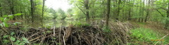 Beaver Dam  on Brink Road in Candor, NY