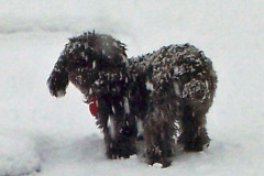 Tootsie is the ONLY one who loves the snow anymore!!!
