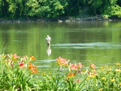 Fly Fishing on Susquehanna in Owego