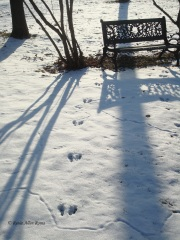 Critter tracks in the snow