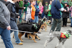 Dogs in St Patrick's Day Parade