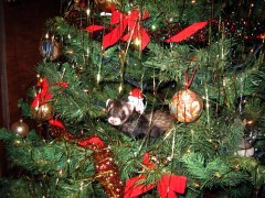 Ferret ornament