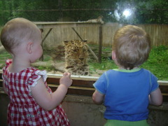 Meeting the leopards