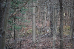 Big buck looking for love