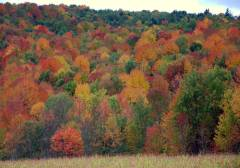 Fall in Chenango County Rte 23.
