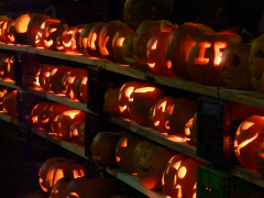 The 11th Annual Norwich Pumpkin Festival
