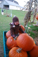 Picking Pumpkins on Route 8 in Mt Upton
