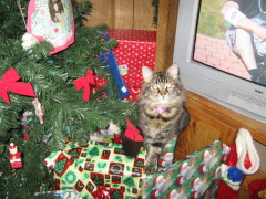 MEOW  CHRISTMAS is ALMOST HERE!!!!!!
