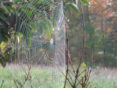 The Perfect Spider Web
