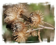 Burdock and Bug, Fall Colors.