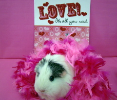 Athena Thepig Searches for her Valentine