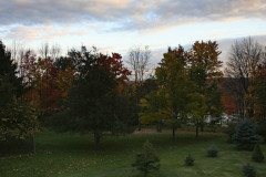 Great colors in the Trees & Sky
