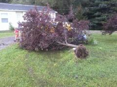 the storm sunday up-rooted my tree