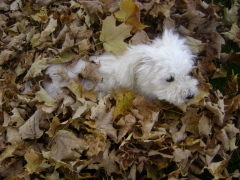 A nap in the leaves