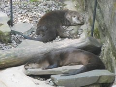 Lounging At The Zoo
