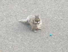 Squirrels will endure anything peanuts.