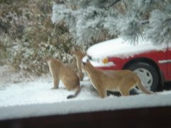 cats were photographed in East Corning