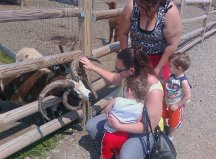 our trip to Animal adventure